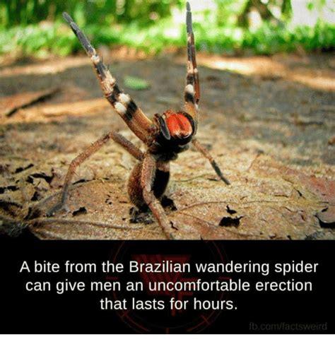 Best 25 Spider Meme Ideas - 25 best memes about brazilian wandering spider