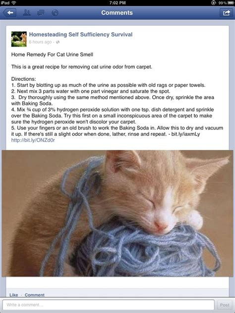 how to get rid of cat urine smell on couch get rid of cat urine smell cleaning tips pinterest