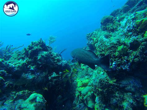 dive cozumel grouper diving in cozumel agua clara diving tulum