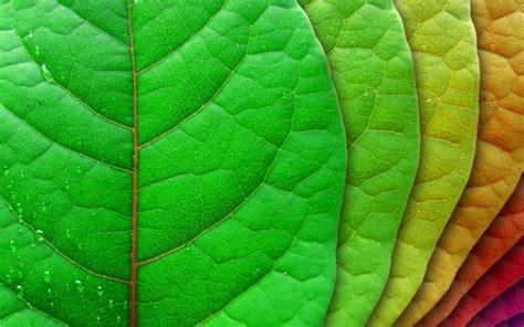 pengaruh matahari  warna hijau daun green  healthy