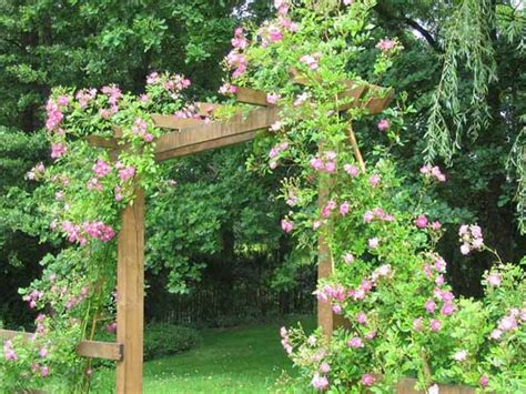 Cheap Ways To Decorate Your Backyard - roses for beautiful outdoor decor charming garden designs and backyard ideas