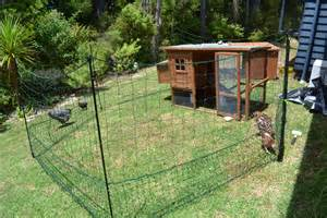 backyard chooks my tiny brood of backyard chooks chooks hens or chickens