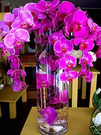 25  best ideas about Purple Orchids on Pinterest