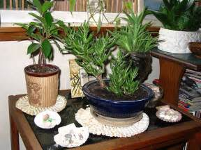 Home Decor Plant Artificial Vs Real Plants For Your Home