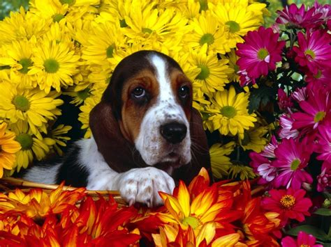 imagenes animales relacionandose acr 243 sticos y poemas d 237 a de la primavera arte taringa