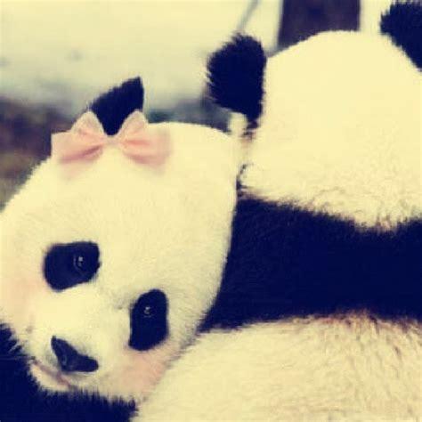 imagenes de hermosos osos imagenes everywhere ositos panda