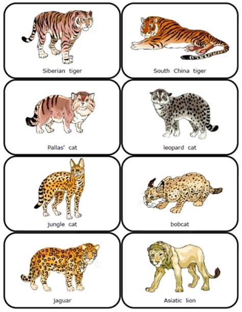 big names image gallery names big cats