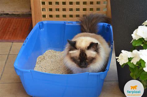 lettiere gatto dove mettere la lettiera scegli le migliori lettiere per