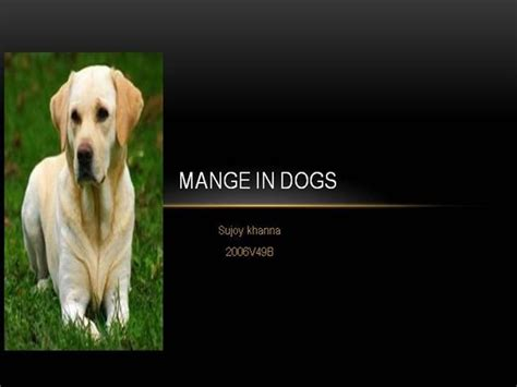 is mange in dogs contagious mange in dogs authorstream