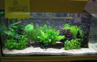 my fresh water aquarium planted tank walstad