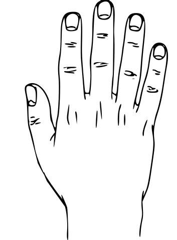 filehand external anatomy dorsumsvg wikipedia