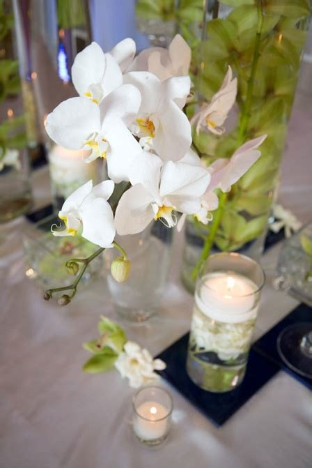 Phalaenopsis Orchid Centerpiece Planning Our 8 Best Phalaenopsis Orchids Arrangements Images On