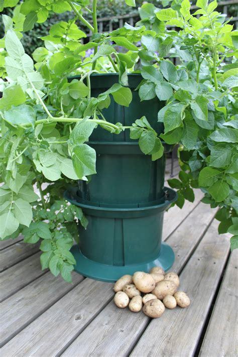 simplicity potato grow pot