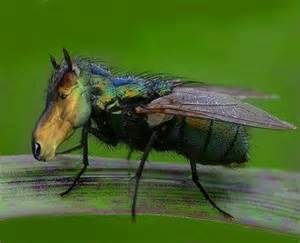 Mosquito Backyard Control Don T Let Horse Flies Ruin Your Backyard Fun Dart Pest