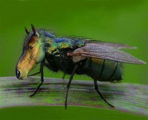 backyard flies don t let horse flies ruin your backyard fun dart pest