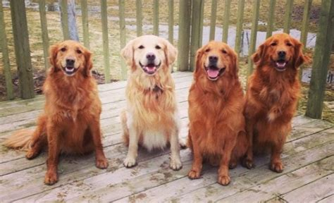 puppy family family reunions are a thing and they re adorable