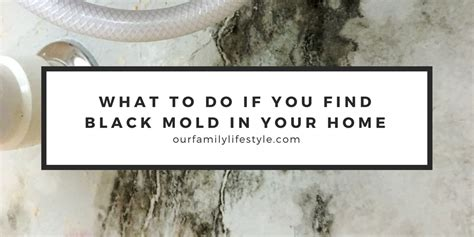 How Do You Detox Your From Black Mold by When You Find Black Mold In Your Brand New House
