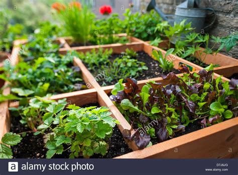 Square Foot Gardening Flowers Square Foot Gardening By Planting Flowers Herbs And Vegetables In Stock Photo 56334056 Alamy