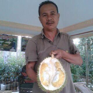 Bibit Durian Bawor Majalengka semua tentang durian 4 durian unggulan yang paling diburu