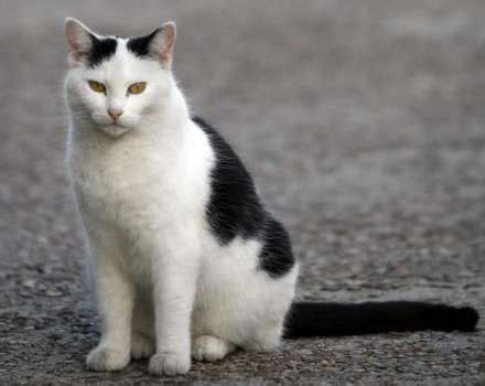 alamo and cat alamo cat keeps lone landmark houston chronicle