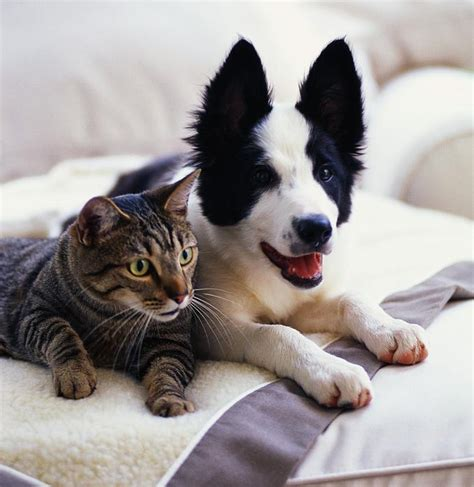 images of puppies and kittens cat and photos xemanhdep photos awesome pictures gallery