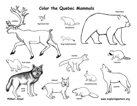 coloring pages quebec canadian province quebec