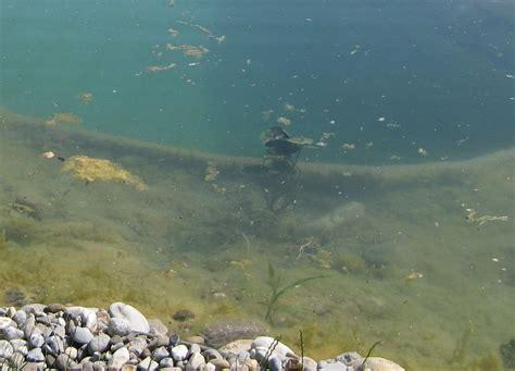 fadenalgen im schwimmteich algenbekaempfung