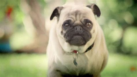doritos commercial pug bowl pug auto design tech