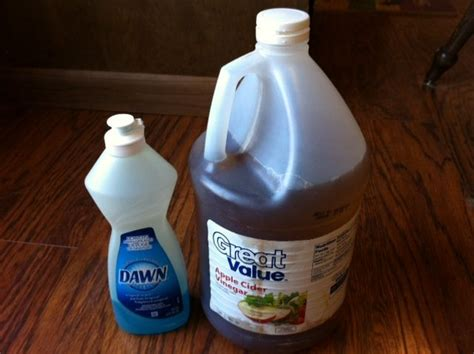 fruit fly remedy apple cider vinegar and dishwashing