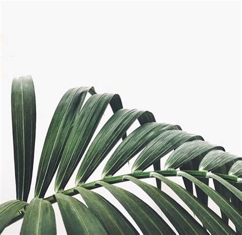 green minimalist pale photography plants vscocam