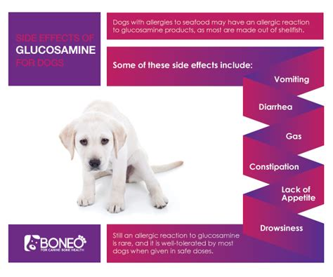 glucosamine side effects glucosamine for dogs side effects and benefits boneo canine 174