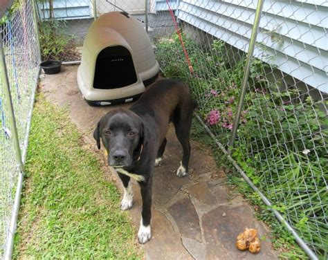 best house dog breeds best dog house for a large breed dog