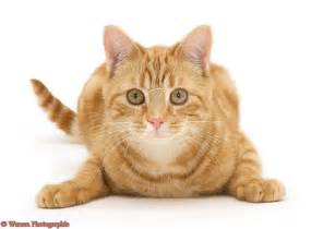 Cat character design on Pinterest   Ginger Cats, Cat Drawing and Cat ... Cat