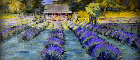 shelby michigan lavender maze shelby michigan lavender maze shelby michigan lavender