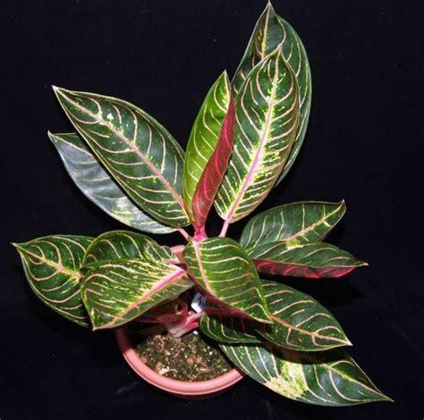 indoor plants suitable  dark rooms interior design