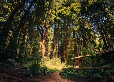 cabin in big sur surrounded by redwoods trey ratcliff test