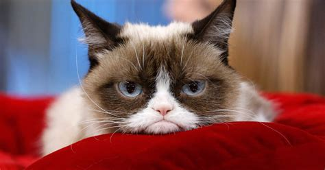We Are The Cat On Tour by Is Dead The Real Grumpy Cat Will Appear In Cats