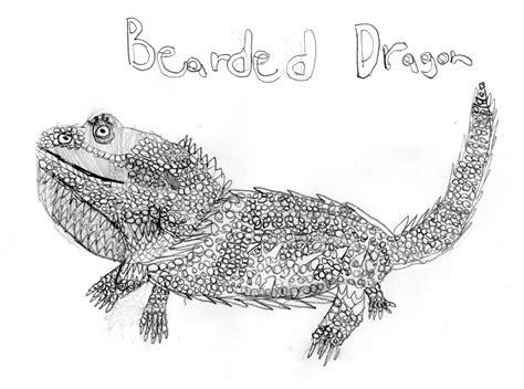 bearded dragon drawing dswenson 169 2018 jul 27 2013