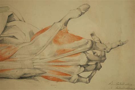 tavola anatomica muscoli antik e shop strumenti medici d epoca 296 tavola