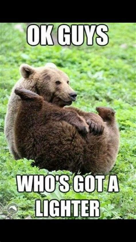 Bear Meme - grizzly bear meme lol animals pinterest bear meme