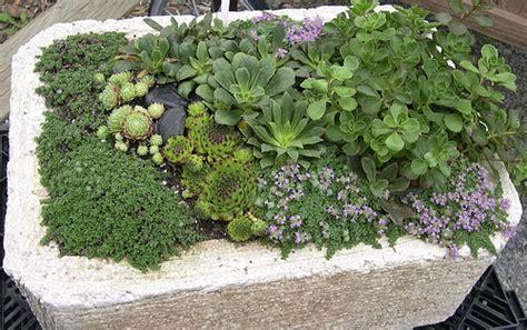 hypertufa planter gardeners supply