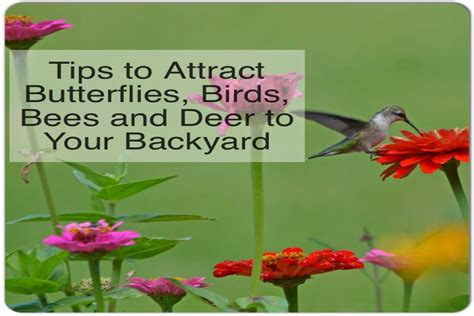how to attract wildlife to your backyard tips to attract butterflies birds bees and deer to your yard