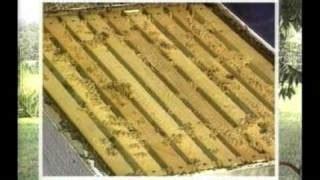 backyardhive new dvd alternative beekeeping using the top beekeeping dvd the of bee