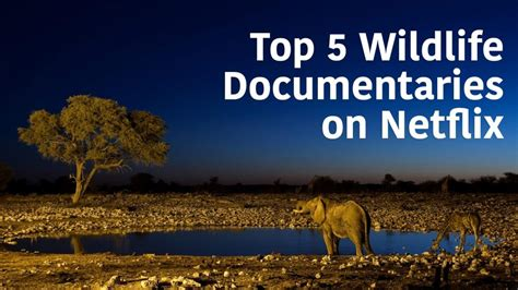 best documentaries 5 of the best wildlife documentaries on netflix whats on