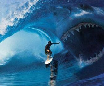 imagenes reales megalodon pick of the day megalodon huge sharks pinterest