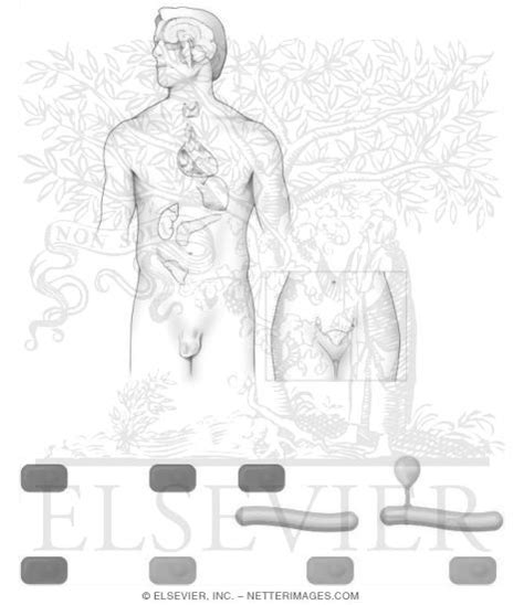free coloring pages of endocrine glands