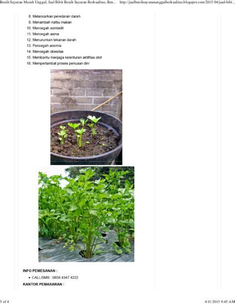 Jual Bibit Seledri Summer hp 0856 4347 4222 benih seledri jual bibit benih seledri