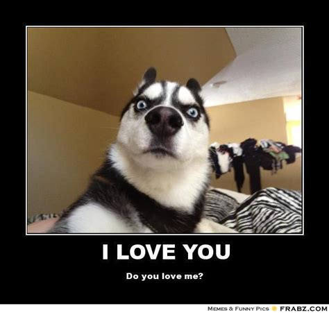 I Love Sex Meme - i love you shocked dog meme generator posterizer