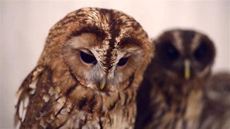 Set Owl Rok Fit L Vr akiba fukurou tokyo s owl cafe cnn