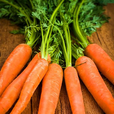 coding for carrots organic carrots scarlet nantes 250mg heirloom non gmo